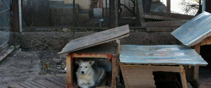 Hundehütten für Vratsa